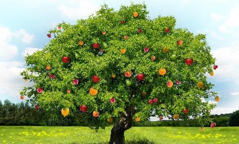 Meyveleri Yemeye Başladık